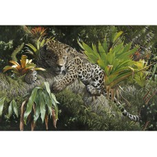 Limited edition print - Amazonian Prince by Steve Burgess